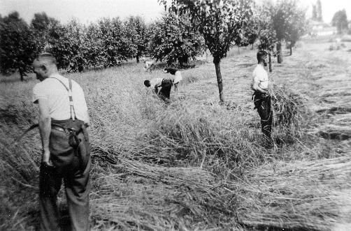 Contadini bressesi al lavoro nei campi
